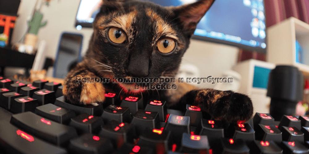 Ремонт компьютеров на Белорусской фото
